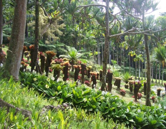 Jardin Balata Martinique
